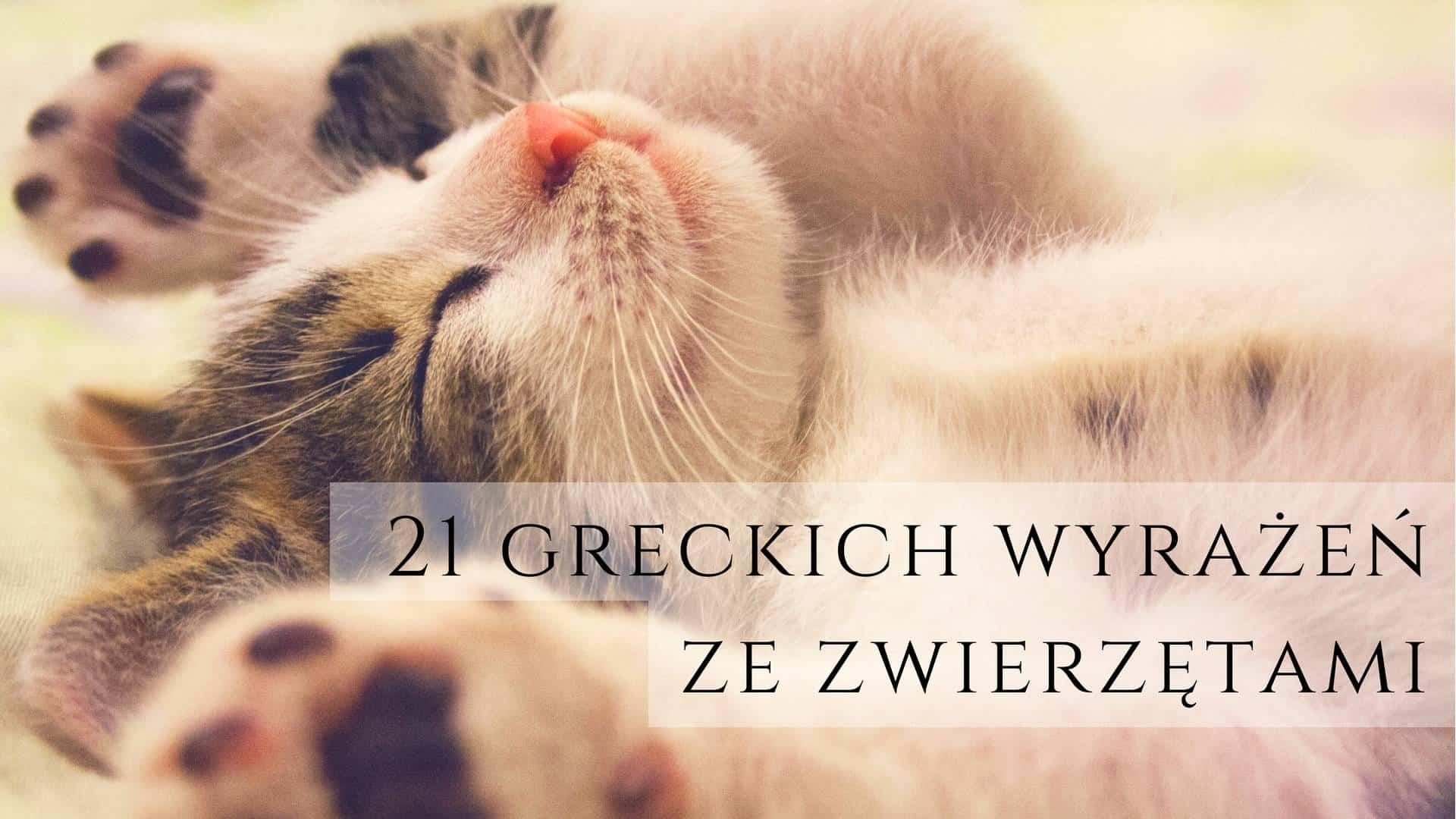 greckie wyrazenia ze zwierzetami