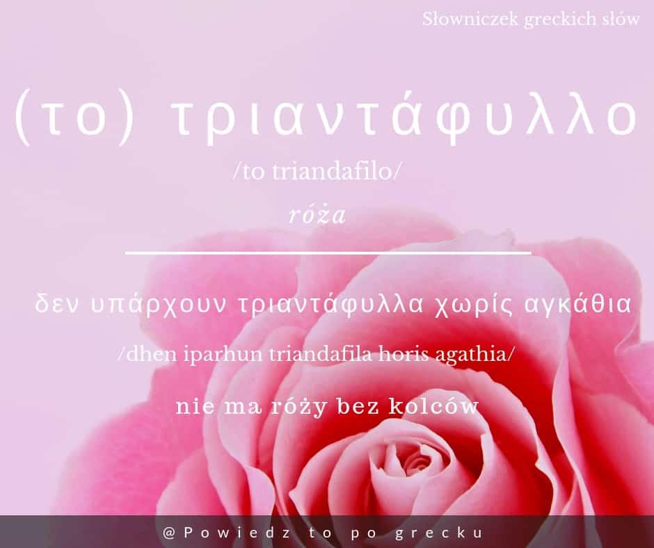 róża po grecku